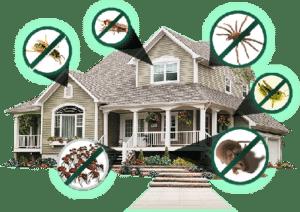 افضل شركات مكافحة الحشرات المنزلية