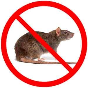 شركه مكافحه فئران بالرياض